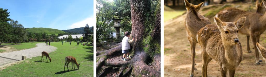奈良公園・奈良市の緑豊かなおすすめ公園