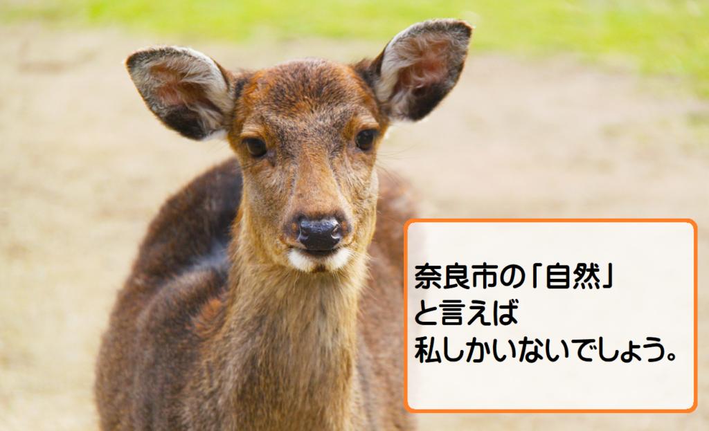 【奈良市の住みやすさ勝手に評価】自然は豊か?おすすめの公園は?