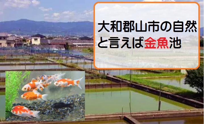 【大和郡山市の住みやすさ勝手に評価】自然は豊か?おすすめの公園は?